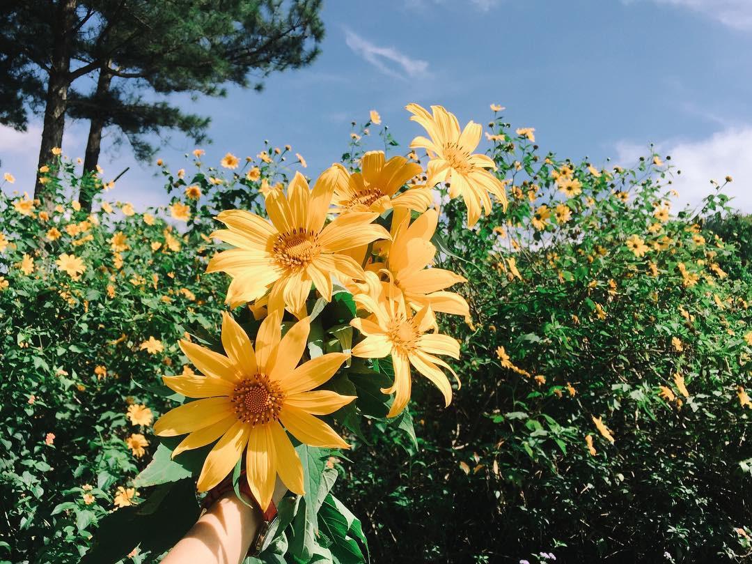 Những mùa hoa Đà Lạt đẹp xao xuyến lòng người - ảnh 5
