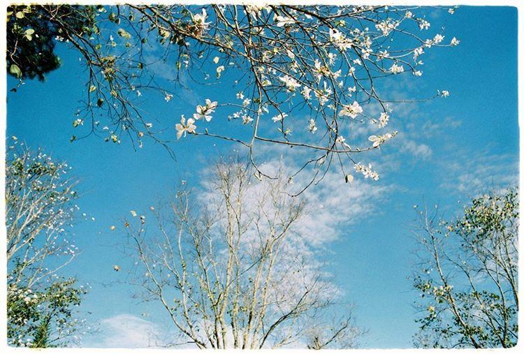 Những mùa hoa Đà Lạt đẹp xao xuyến lòng người - ảnh 8