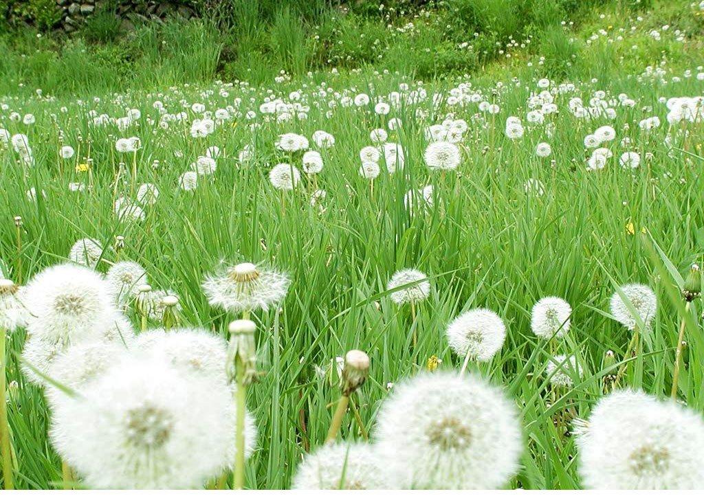 Những mùa hoa Đà Lạt đẹp xao xuyến lòng người - ảnh 9