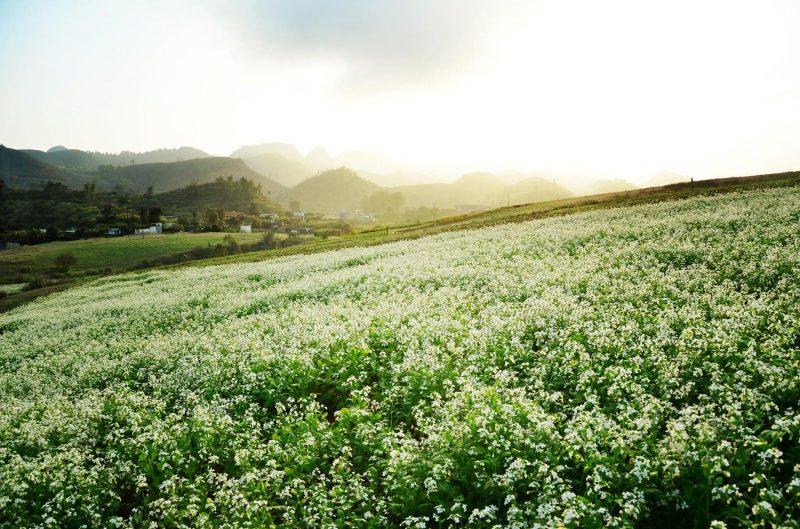 Những mùa hoa Đà Lạt đẹp xao xuyến lòng người - ảnh 4