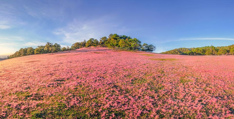 Những mùa hoa Đà Lạt đẹp xao xuyến lòng người - ảnh 7