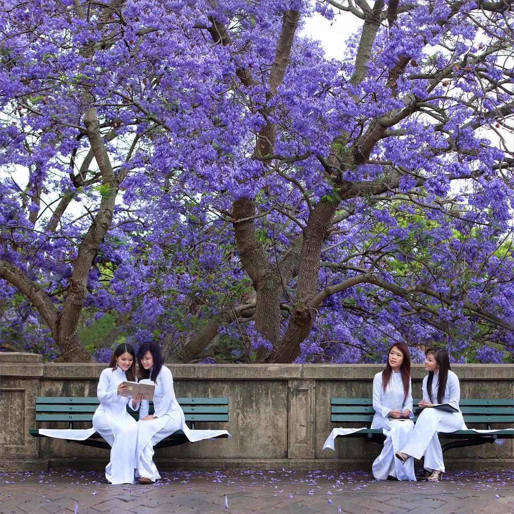 Những mùa hoa Đà Lạt đẹp xao xuyến lòng người - ảnh 2